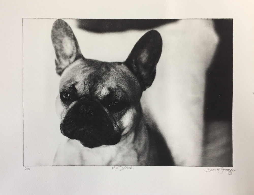 Miss Delilah the French Bulldog
